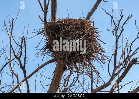 Blick auf Bird's Nest auf kahlen Ästen im Herbst - Stockfoto