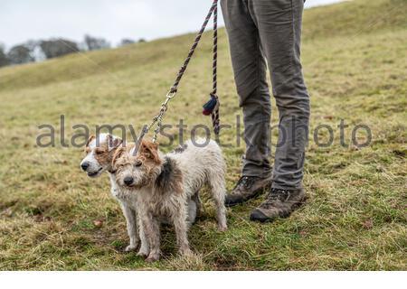 Midlem, Melrose, Scottish Borders, Großbritannien. 7. Dezember 2019. Das Zetland Hunt, die einst die meisten Yorkshire bedeckt, an einem gemeinsamen in die buccleuch Hun treffen - Stockfoto