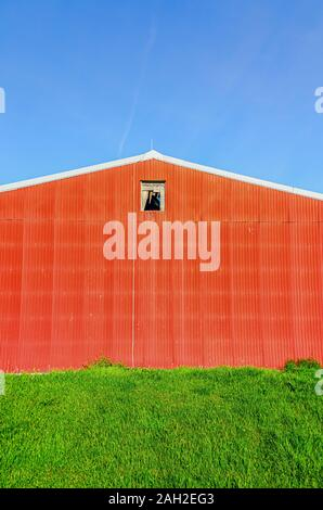 Eine Außenwand eines roten Scheune mit Wellplatten aus Metall. Eine gebrochene Fenster sichtbar ist. - Stockfoto