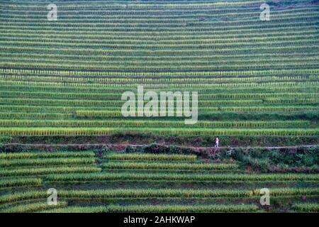 Ein Chinesischer tourist Spaziergang durch die Reisterrassen Longji, Guangxi, China - Stockfoto