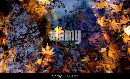 Goldgelbe Blätter schweben auf Wasser-/Blumenhintergrund