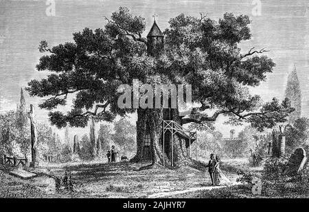 """Pflanzen: in Allouville-Bellefosse in Seine-Maritime, Frankreich, in die Kapelle Eiche, ist eine hohle Eiche (Quercus robur) über 1.000 Jahre alt. Eine Wendeltreppe rund um den hohlen Stamm bietet Zugang zu zwei Kapellen - Notre-Dame-de-la-Paix (""""Unsere Liebe Frau des Friedens"""") und der Chambre de l'Ermite (der Eremit Zimmer"""") in 1696 erbaute und heute noch benutzt werden. Wenn der Baum von einem Blitz getroffen; das dabei entstehende Feuer langsam durch das Zentrum verbrannt und ausgehöhlt, der Baum, die lokale Abt und Dorf Priester, behauptet ein heiliges Ereignis war und baute ein Wallfahrtsort, der Jungfrau Maria, die in der Höhle gewidmet. - Stockfoto"""