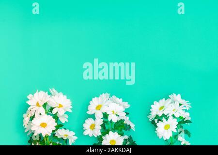 Frühling oder Sommerwohnung lagen mit weißen Chrysanthemen Blumen auf grünem Papierhintergrund