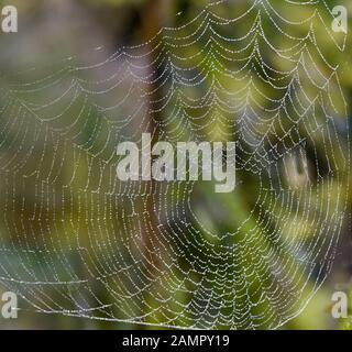 Spinnweine im gegenteischen mit Wassertropepfchen auf den Faeden. Kopfsteinpflaster in der Rückleuchte mit Wassertropfen auf den Fäden. - Stockfoto