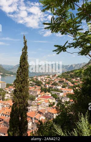 Blick über die Dächer der Altstadt, Kotor, Montenegro von Put Do Svetog Ivana (Straße zum Fort von St. John) - Stockfoto