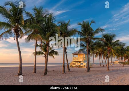 Palmen bei Sonnenaufgang in Miami Beach, Florida. - Stockfoto