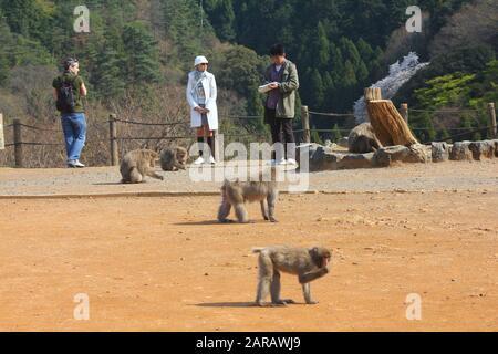 KYOTO, Japan - 17. APRIL 2012: Besucher nehmen Sie Fotos in Arashiyama, Kyoto, Japan. Iwatayama Monkey Park ist berühmt für wilde japanischen Makaken coe