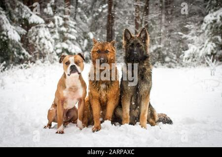 Drei Hundefreunde sitzen an einem verschneiten Wintertag im Wald - Stockfoto