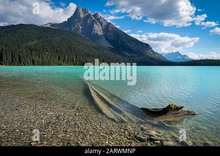 Deadwood im Emerald Lake mit Unterstützung von Wapta Mountain, Yoho National Park, The Rockies, Alberta, Kanada - Stockfoto