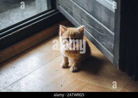 Kleine orangefarbene blauäugige Kätzchen - Stockfoto