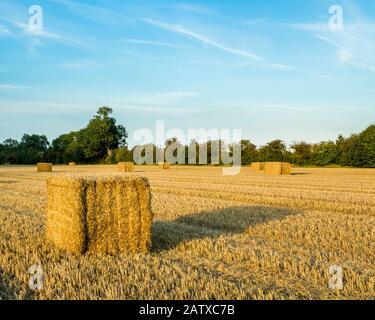 Strohballen. Das Strohhalm wurde gebündelt und in Ballen gebunden, die nach der Weizenernte von einem Feld abgesammelt wurden, Nottinghamshire, England, Großbritannien - Stockfoto