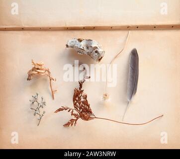 Anordnung von natürlichen Objekten, darunter ein Farnfrond, Samenschoten, ein Feder- und Kleintierschädel auf alten Buchseiten mit Textraum - Stockfoto