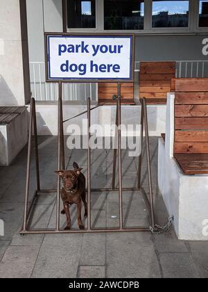 """Brauner Hund an der Leine im Fahrradregal sitzend, Schild mit der Aufschrift """"Parken Sie Ihren Hund hier"""" - Stockfoto"""