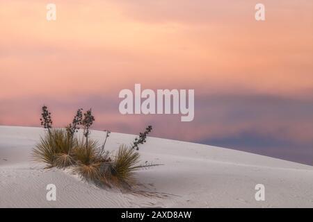 Sonnenuntergang über den Seifenbaum Yuccas, Yucca elata und den Sanddünen im White Sand National Park, New Mexico, Vereinigte Staaten. - Stockfoto