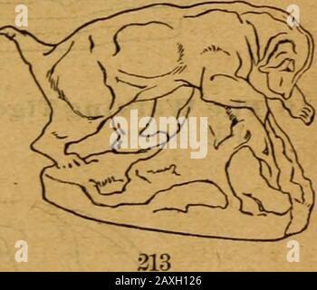 Katalog der Kollektionen der American Art Association, die absolut versteigert werden sollen, um den Nachlass des verstorbenen RAUSTIN Robertson zu begleichen; Teil zuerst. 208 215 Ape Biding a Gnu. (1842). Höhe, 9 Zoll; Länge, 10 Zoll. 216 Der Gehende Tiger. Höhe, 8)4 Zoll; Länge, 16# Zoll. 217 Bull Bearing, Angegriffen von einem Tiger. (1837). Höhe, 9 Zoll; Länge, 11 Zoll. 106 BARYE-BRONZEN