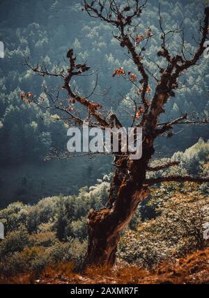 Trockener Baum im Wald und mit Aussicht und Filter - Stockfoto