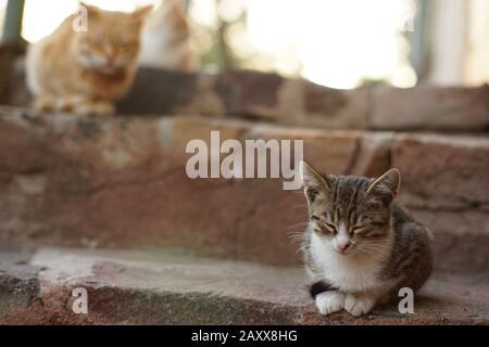 Schöne Kätzchen sitzen auf den Steinstufen. Ingwerkatze im verschwommenen Hintergrund. - Stockfoto