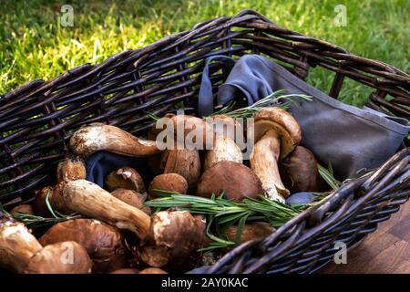 Nahaufnahme frisch gepflückter Pilze in einem Korb, Bulgarien - Stockfoto