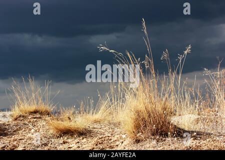 Dramatischer Himmel und gelbe Wildgräser - Stockfoto