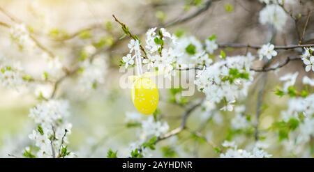 Ostereier hängen an blühenden Kirschzweigen im sonnigen Garten. Blühende Baumzweige für Ostern dekoriert. Celebratiing Ostern draußen. - Stockfoto