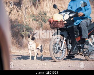 Hund lief nach dem Besitzer, freundlicher streunender Hund auf der Straße - Stockfoto