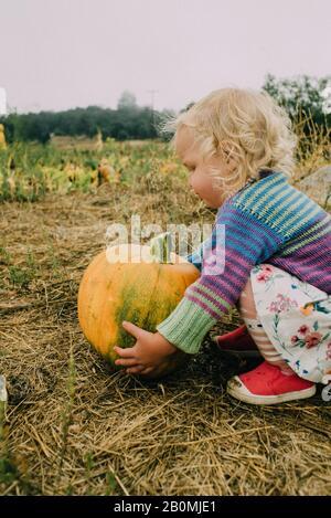 Kleines Mädchen nimmt einen Kürbis an einem Kürbis-Patch - Stockfoto