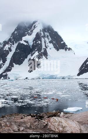 Gentoo Penguins, die auf der Peterman Island in der Nähe des Lemaire-Kanals, Graham Land, Antarktis, mit Touristen von einem Kreuzfahrtschiff auf dem Meer Kajakfahren - Stockfoto