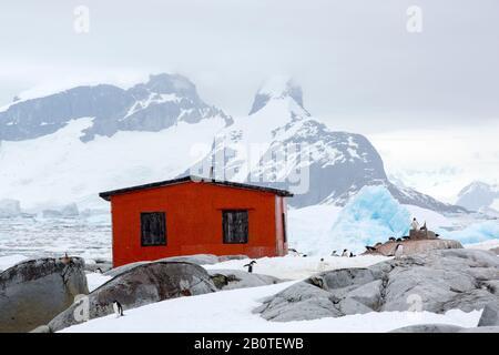Pinguine eine alte argentinische Hütte auf der Peterman Island in der Nähe des Lemaire-Kanals, Graham Land, Antarktis. - Stockfoto
