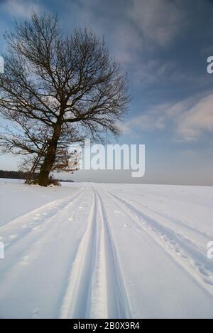 Loipen im Winter, neben einem Baum, - Stockfoto