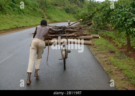 Man schiebt Fahrrad mit Brennholz, Burundi, Afrika - Stockfoto