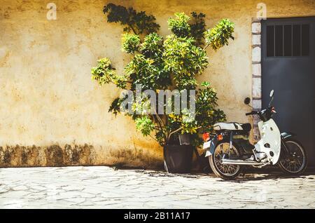 Weißer Roller, der in der Nähe des Baumes steht, der im Topf vor der alten gelben Wand wächst - Stockfoto