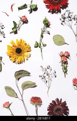 Trockene Blumen Muster auf weißem Hintergrund. - Stockfoto