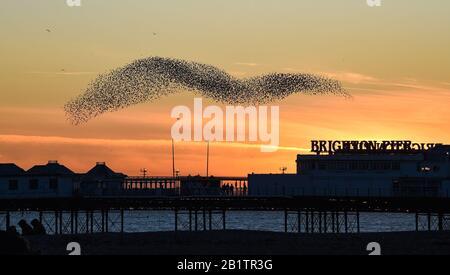 Brighton, Großbritannien. Februar 2020. Starlinge tanzen über den Himmel über dem Brighton Palace Pier während ihrer täglichen Murmeln bei Sonnenuntergang. Für Großbritannien wird jedoch mehr schlechtes Wetter prognostiziert, da Storm Jorge an diesem kommenden Wochenende eintreffen wird. Credit: Simon Dack/Alamy Live News - Stockfoto