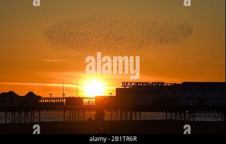Brighton UK 27. Februar 2020 - Starlinge tanzen während ihrer täglichen Murmeln bei Sonnenuntergang über dem Himmel über dem Brighton Palace Pier. Für Großbritannien wird jedoch mehr schlechtes Wetter prognostiziert, da Storm Jorge an diesem kommenden Wochenende eintreffen wird. Kredit: Simon Dack / Alamy Live News - Stockfoto