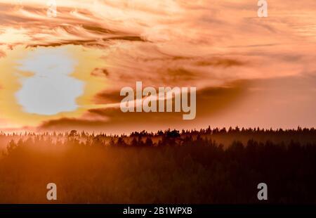 Leuchtendes Rot Orange dramatischer Sonnenuntergang mit flockigen Wolken über nebeligen Kiefernwäldern in skandinavien - Stockfoto