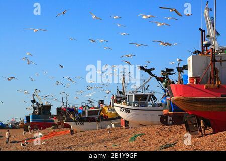 Möwen schweben über Hastings Fischerboote auf dem Old Town Stade Fisherers Beach in Rock-a-Nore, East Sussex, Großbritannien - Stockfoto