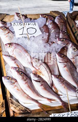 Frischer Fisch auf Eis. Frische Fischsorte auf einem Fischmarkt im Freien in Griechenland zu verkaufen - Stockfoto