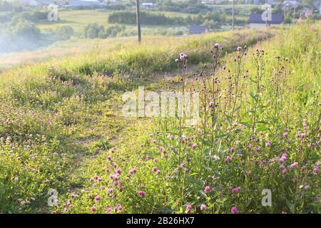 Ein Pfad zwischen hohem Gras und Kleeblatt. Sommer schöne Landschaft. Stock-Fotografie für Web, Print, Hintergrund und Hintergrundbilder. - Stockfoto