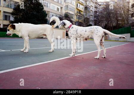Hunde spielen im park - Stockfoto