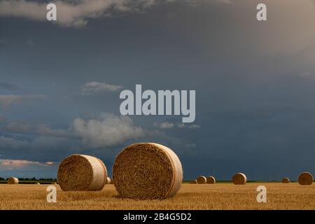 Runde Strohballen auf geerntetem Feld im donnernden Abendlicht - Stockfoto