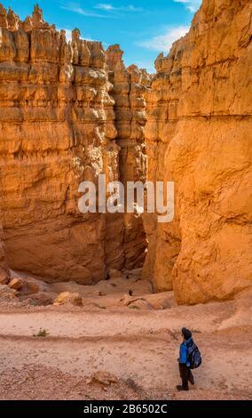 Wanderer mit Blick auf den Wall Street Abschnitt des Navajo Loop Trail, Bryce Canyon National Park, Utah, USA - Stockfoto