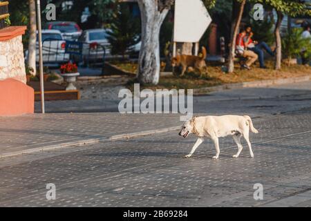 Istanbul streunender Hund geht leider allein auf der Straße - Stockfoto
