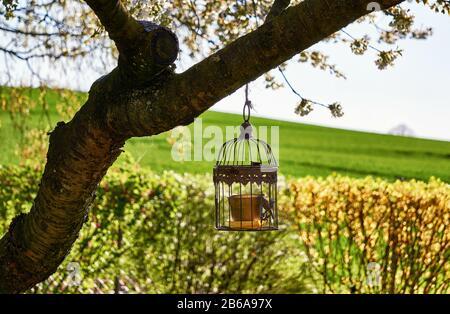 Metall-Vogelkäfig hängt als Dekoration im Garten in einem alten Baum. - Stockfoto
