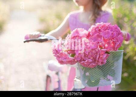 Rosa Hortensia Blumen im Fahrradkorb bei Sonnenuntergang. Kindermädchen fährt mit Blumenstrauß auf dem Fahrrad. Kind genießt Ferien