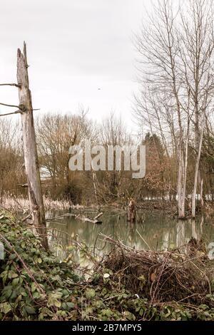 Wenig Wampland mit stagnierendem Wasser und durchbrochenen Bäumen - Stockfoto