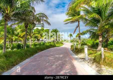 Gehweg mit Palmen in Miami Beach, Florida - Stockfoto