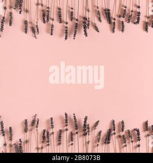 Rahmen aus getrockneten Lavendelblüten auf pinkfarbenem Pastellgrund. - Stockfoto