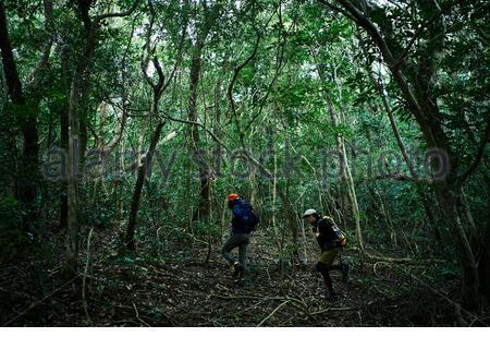 Männer, die im Wald spazieren - Stockfoto