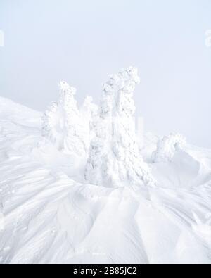 Mit Eis bedeckte Bäume und jetzt auf dem Berg Zao Japan. - Stockfoto