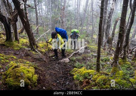 Zwei Wanderinnen Mittleren Alters Auf Dem East Coast Trail - Stockfoto